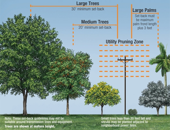 Planting Trees Around Power Lines : Find the right tree trees come in all shapes